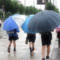 Photos: 雨だれは~♪
