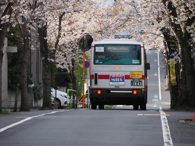都立01系統と桜並木(その1)