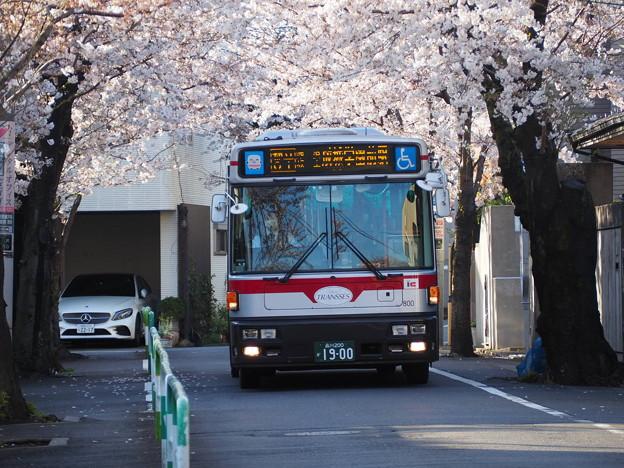 都立01系統と桜並木(その2)