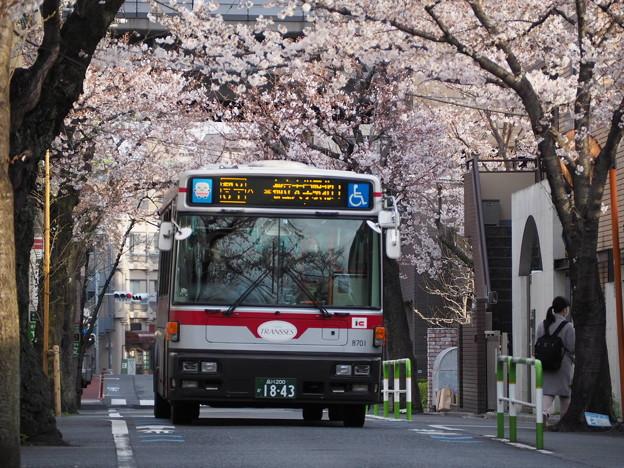 都立01系統と桜並木(その3)