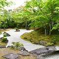 新緑の石庭