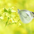 季節外れの早春