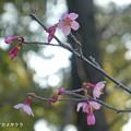 Photos: オカメ0228_010okame