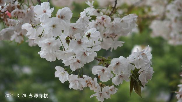 永源寺_2310eigenji