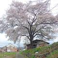 Photos: 川場の桜 0019c2000_stitch