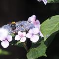 クマバチ4581