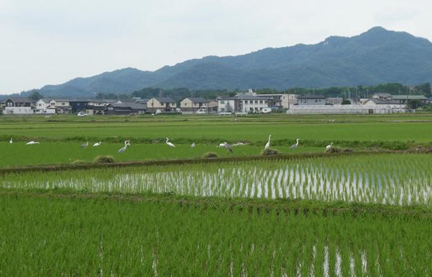 田沼付近P1110302c