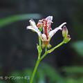咲き始めました_119hototo