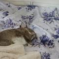 可愛いメメの寝姿