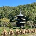 Photos: 三重塔と稲杭