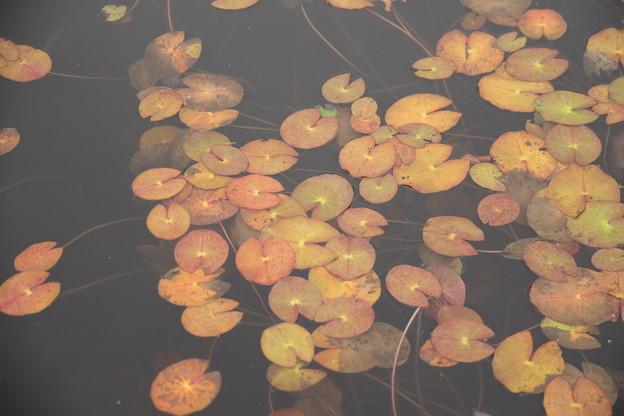 池塘の小さな秋