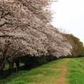 Photos: 20210328桜02