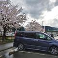 Photos: 道の駅にて桜と愛車トヨタノア80系