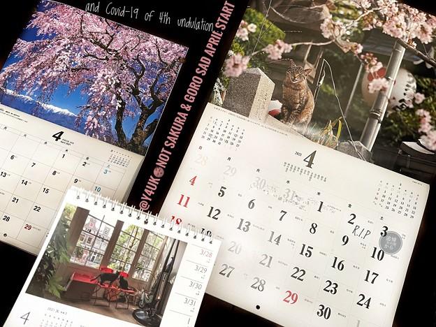 4月早々絶望悲しい訃報とコロナ第4波変異ウイルス拡大開始Not Sakura&Goro Sad April Start&Covid-19 of 4th undulation岩合光昭猫カレンダー毎月恒例