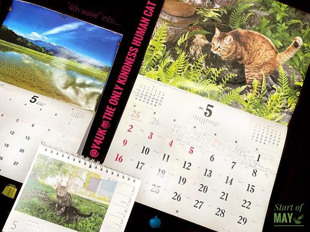 """もぅ5月The only kindness human cat.""""4th wave"""" of May4月30日iPadPro12.9予約完了毎月恒例岩合光昭カレンダーめくり島根モルドバ信州水田雲5月は緑"""