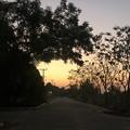 Photos: ヤンゴンのガーデンの朝 3月5日 (4)