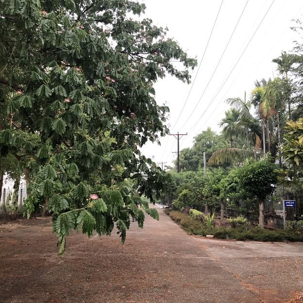 ヤンゴン4月5日の朝 (3)