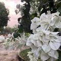 ヤンゴン4月6日の朝 (2)
