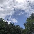 Photos: 6月19日の少しだけの青空