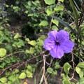 Photos: ミャンマーの花 (1)