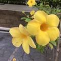 Photos: ミャンマーの花 (2)