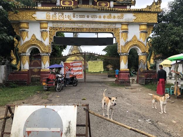 ヤンゴンのコロナワクチン接種会場 (1)
