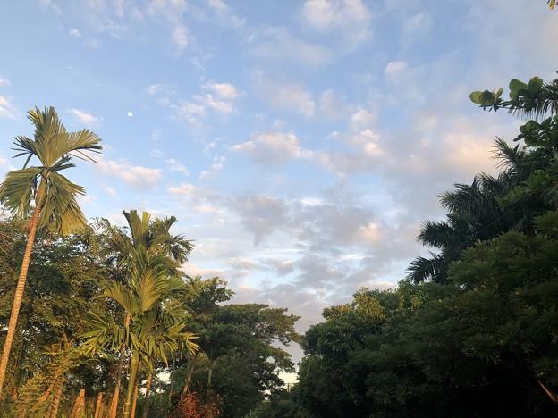 10月24日のヤンゴンの朝 (5)
