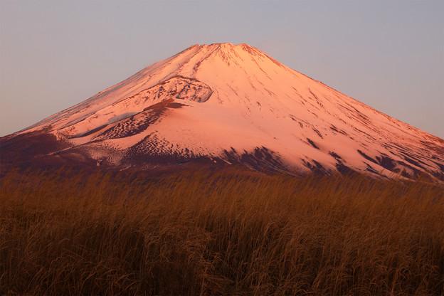 Photos: 紅富士