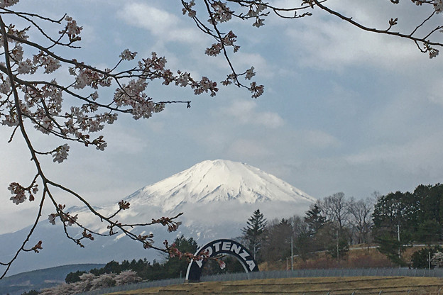 桜前線の状況