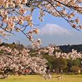 桜前線到着