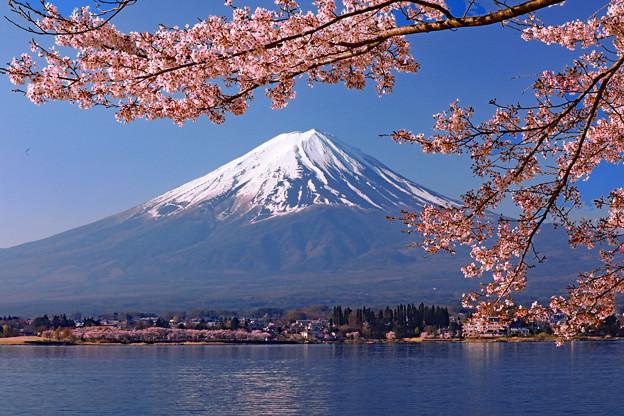 桜から仰ぐ 全景