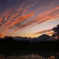 Photos: 高層雲の夕景