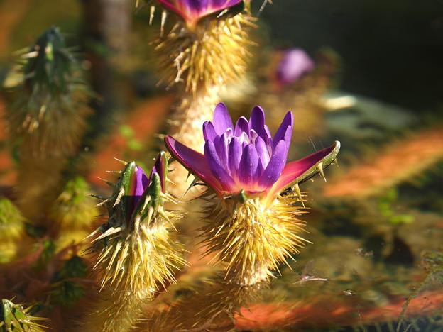 Photos: 棘の花