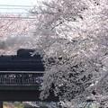 桜でサンドイッチ!