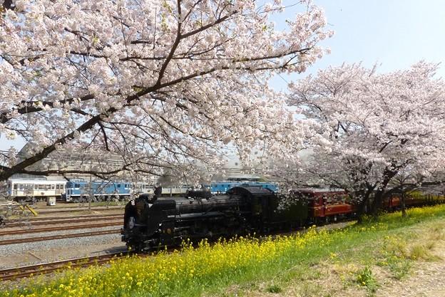 桜花の秩父 7カット