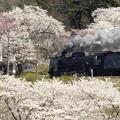 みなかみの桜