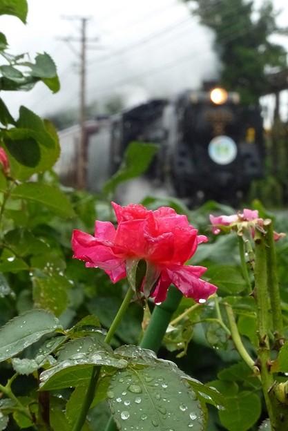 9月の雨(1)5カット