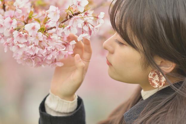 桜の咲くころに