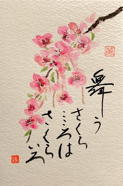 さくら満開にIMG_0529 by ふうさん