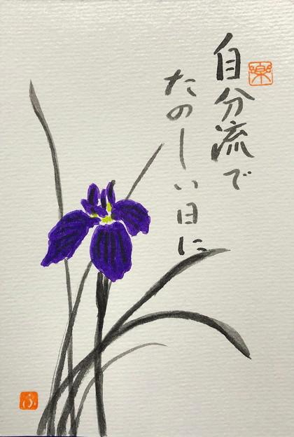 菖蒲 IMG_0763 by ふうさん