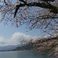 Photos: 2021年3月29日 海津大崎 桜