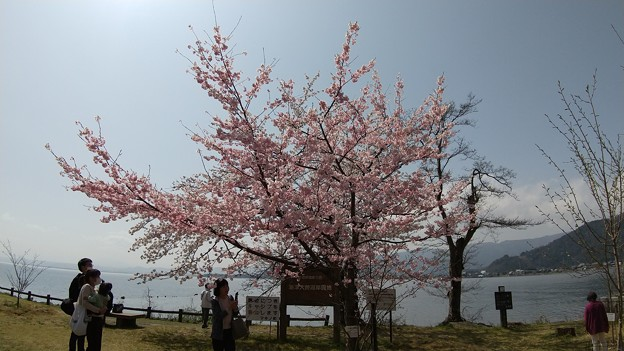 2021年3月29日 海津大崎 桜