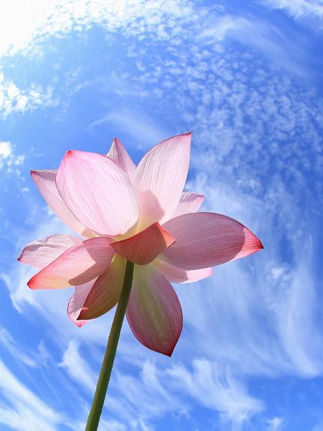 早朝の空と花