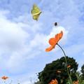 Photos: ハチとチョウ