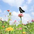 Photos: 10月の花畑