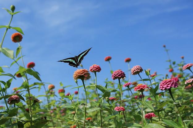 青空と花と蝶