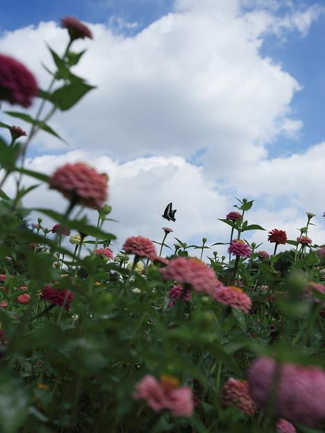 花畑の向こうに