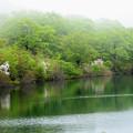 須川湖~靄とコブシ