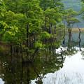 初夏の水没木