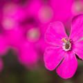 Photos: 最近流行りの花